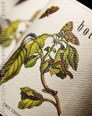 """2017 Antica Terra, """"Botanica"""" Pinot Noir"""